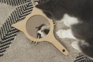 Käsipeili (kissa)